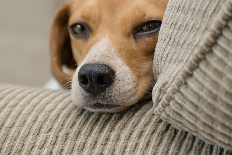legowisko psie jest zawsze najlepsze