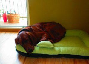doskonałe legowisko dla dużego psa