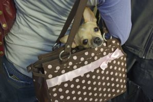 wygodna torba do transportu psa