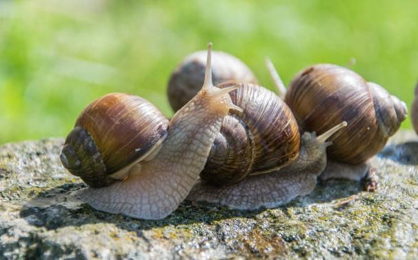 Trucizna na ślimaki